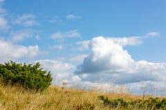 在天空的云彩在草甸 免版税库存图片