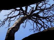 在天空的偏僻的树 免版税库存照片