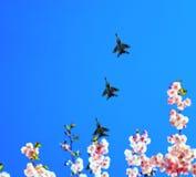 在天空的军用飞机飞行以樱花为背景 免版税库存图片
