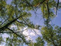 在天空的冠 免版税库存照片