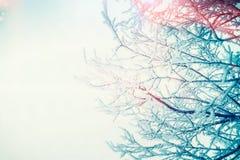 在天空的冬天多雪的树枝 库存图片
