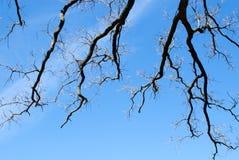 在天空的分数维分支 库存照片