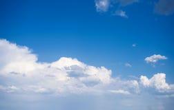 在天空的小鸟 库存照片