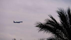 在天空的平面飞行的上流反对棕榈树剪影背景  影视素材
