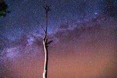 在天空的星 免版税库存照片