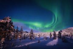 在天空的极光光在冬天森林上 免版税库存照片
