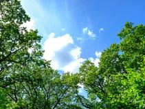 在天空的树梢 库存照片