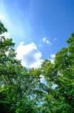 在天空的树梢 免版税库存图片
