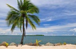 在天空的棕榈树和在端口Denaru,斐济的水平线。 免版税库存照片