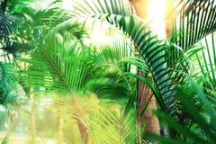 在天空的棕榈树 夏天、假日和旅行概念与拷贝空间 与太阳光线影响的棕榈分支 背景 免版税库存照片