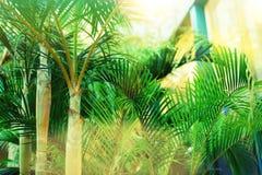 在天空的棕榈树 夏天、假日和旅行概念与拷贝空间 与太阳光线影响的棕榈分支 背景 图库摄影