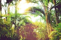 在天空的棕榈树 夏天、假日和旅行概念与拷贝空间 与太阳光线影响的棕榈分支 背景 库存照片