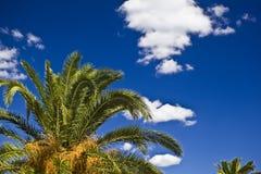 在天空的棕榈树 图库摄影