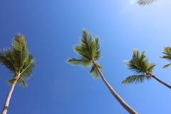 在天空的棕榈树 库存图片
