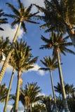 在天空的棕榈树 免版税库存照片
