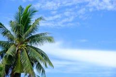 在天空的椰子树 免版税库存图片