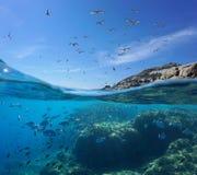 在天空的水下的鱼海鸟和浅滩  免版税库存图片