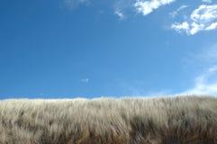 在天空的海滩蓝色沙丘 免版税图库摄影