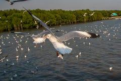 在天空的海鸥飞行在海 图库摄影