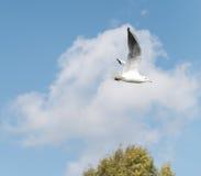 在天空的海鸥 免版税库存照片
