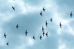在天空的燕子 库存图片