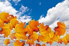 在天空的秋叶 免版税库存图片