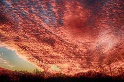 在天空的红色云彩 库存照片