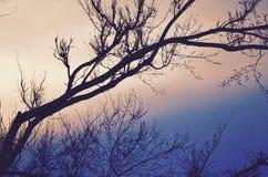 在天空的绘画在天空的新罕布什尔在春天 免版税图库摄影