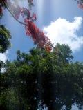 在天空的美丽的花 免版税图库摄影