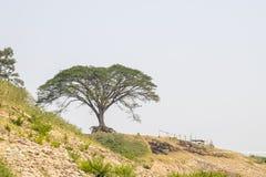 在天空的背景的偏僻的树 免版税库存图片