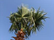 在天空的背景的棕榈树,点燃由太阳 免版税库存照片