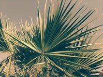 在天空的背景的棕榈树,点燃由太阳 免版税图库摄影