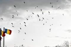 在天空的自由鸟 免版税库存图片