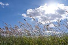 在天空的草 免版税库存图片