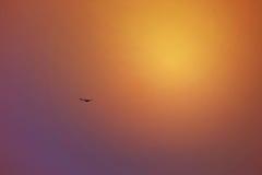 在天空的落日反射,迪拜, 2017年7月21日的阿拉伯联合酋长国 免版税库存图片