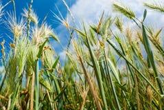 在天空的蓝色草绿色 免版税图库摄影