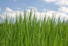 在天空的被覆盖的草绿色 库存照片