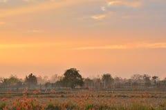 在天空的金黄光在日落期间在晚上 图库摄影