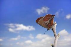 在天空的锋利的灰色蝴蝶 免版税库存照片