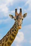 在天空的长颈鹿题头 库存照片
