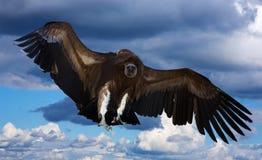 在天空的飞行欺骗 库存照片