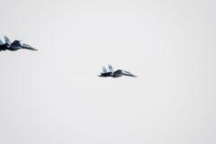 在天空的飞行表演在克拉斯诺达尔机场飞行学校上 以纪念祖国的防御者的Airshow 天空的su35 图库摄影