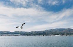 在天空的鸟飞行 库存图片