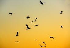 在天空的鸟 免版税图库摄影