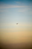 在天空的鸟 库存图片