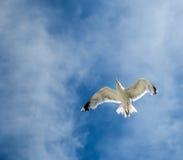 在天空的鸟 免版税库存图片