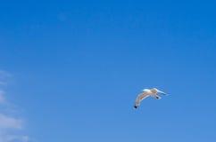 在天空的鸬鹚飞行 库存照片