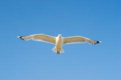 在天空的鸬鹚飞行 免版税库存图片