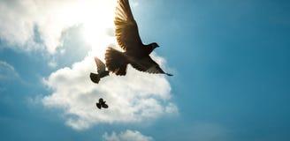 在天空的鸽子反对太阳 库存照片