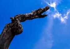 在天空的龙 免版税图库摄影